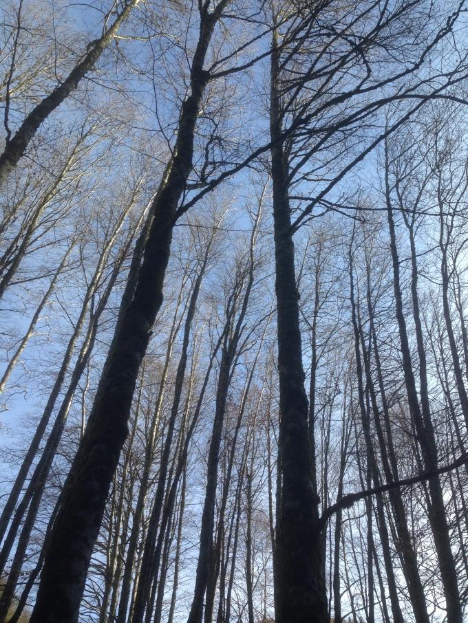 Selva Irati Arriba las Ramas